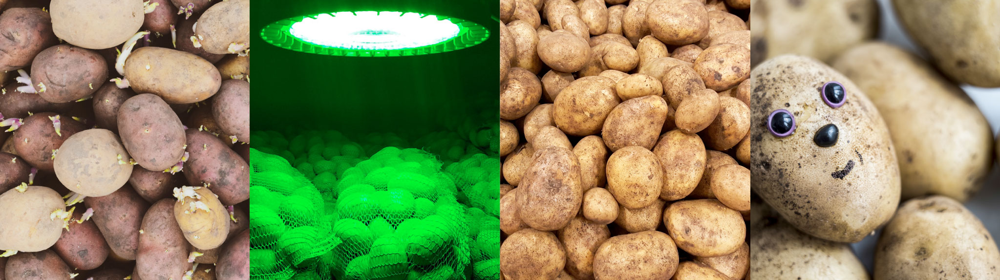 Agrarbeleuchtung landwirtschaftlicher Lagerräume LED-Leuchte E+HB380G protec ENERGYPLUS